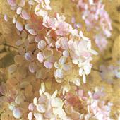 Cuadro canvas flores gilded hydrangea I