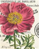 Cuadro canvas peony botany - Cuadros serigrafiados - Objetos de Decoración