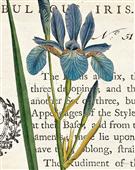 Cuadro canvas flores iris letter