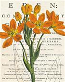 Cuadro canvas flores euphorbia botany