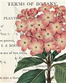Cuadro canvas flores bicolor phlox botany