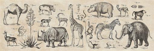 Cuadro canvas wild africa - Cuadros serigrafiados - Objetos de Decoración