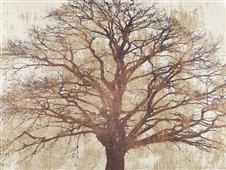 Cuadro canvas moderno sacred oak