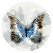 Cuadro canvas indigo butterfly II