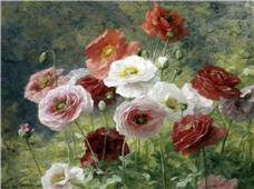 Cuadro canvas Poppies