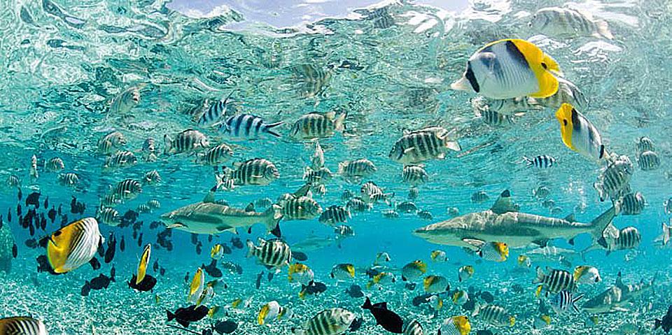 Cuadro canvas tropical fish in bora bora en for Bora bora fish