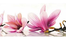 Cuadro canvas magnolia - Cuadros serigrafiados - Objetos de Decoración