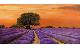 Cuadro canvas campo al tramonto - Cuadros serigrafiados - Objetos de Decoración