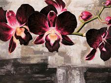 Cuadro canvas velvet orchids - Cuadros serigrafiados - Objetos de Decoración