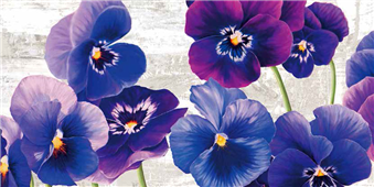 Cuadro canvas flores dance of pansies