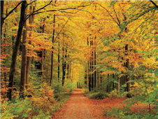 Cuadro canvas forest in autumn