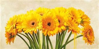 Cuadro canvas flores gerbera abstraction