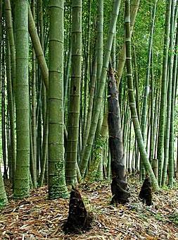 Tienda Vintage con las mejores maderas novles, bambú incluido